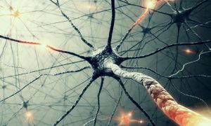 The Basics of Neural Networks, FreeTuts Download
